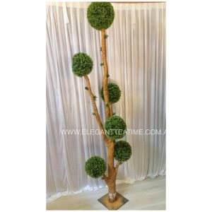 Boxwood Balls Tree 2.4mH